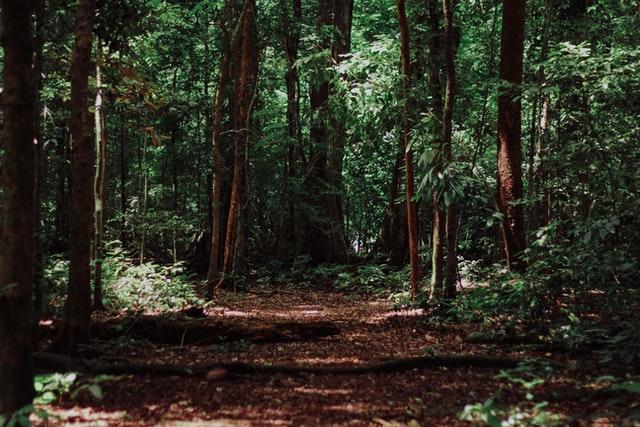 ゴリラがいた森